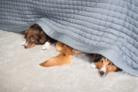 Dogs Hiding Under The Bed Image