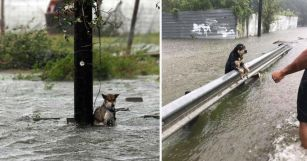 dogs-chained-hurricane-harvey-featured